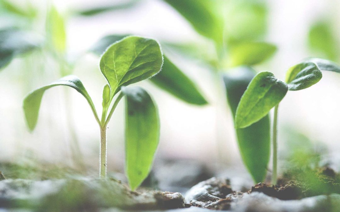 Biofertilizer Production